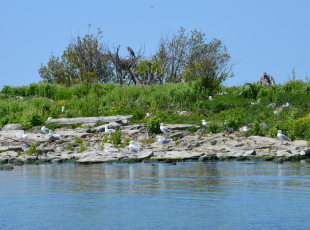 Birdwatching - The Heron Rookery